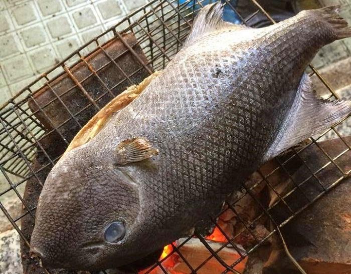 Cá bò đá hay còn gọi là cá bò giáp